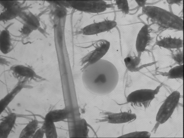 Visualisation de micro-organismes captés à l'aide du CUFES