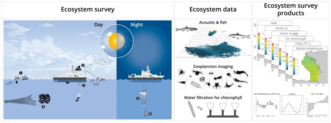 Schéma de la chaîne de collecte de données et produits écosystémiques issus de la campagne PELGAS